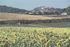 Pic: Sunflowers and the village of Lurs